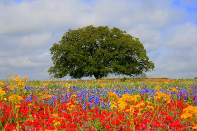 Learn From the Way the Wildflowers Grow